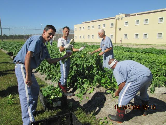Group picture of inmates working in the farm field and displaying the produce they have harvested.