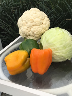 Group of vegetables (Cauliflower, lettuce head, and green, orange, and yellow peppers.