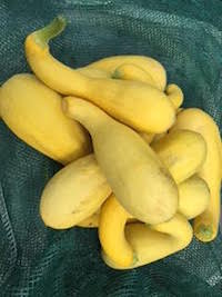 Bunch of bright yellow squash arranged on a green cloth.